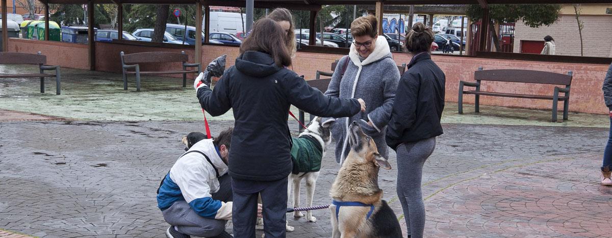 festival adopcion canina